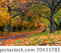 sunny autumn scenery in the park. trees in colorful foliage. ground covered with fallen leaves. seasonal change of nature 70433785