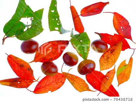 가을의 미각 70438718