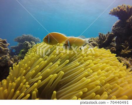 大堡礁Hanabi Rakumanomi 70440491