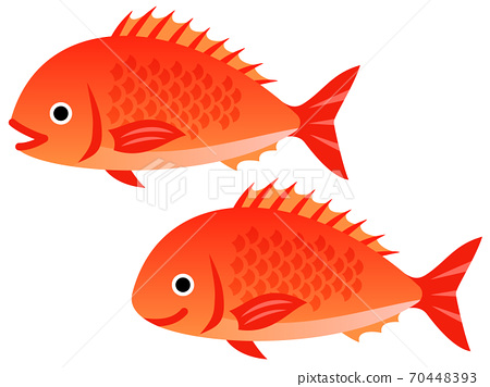鯛魚圖 70448393