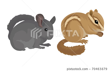 Rodents with Robust Bodies and Short Limbs Vector Set 70463879