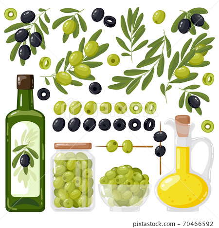 Cartoon olive. Black and green olives, olive tree branches and extra virgin olive oil, healthy organic olive products vector illustration set 70466592
