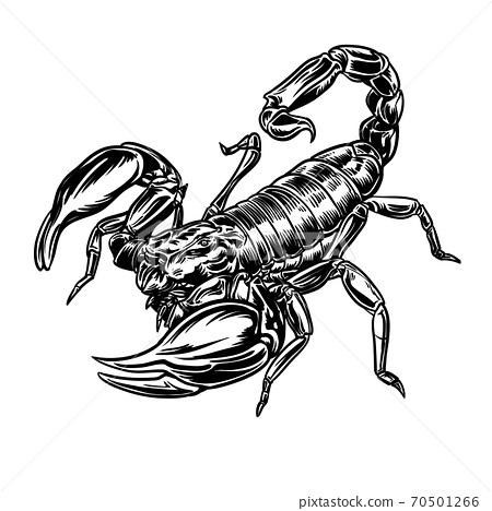 Graphical scorpion 70501266