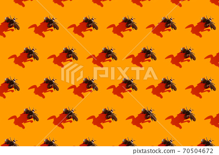 Halloween minimal pattern made of fly and shadow on orange background.  70504672