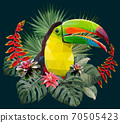 Polygonal Illustration Toucan bird. 70505423