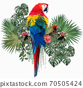 Polygonal Illustration Scarlet macaw bird. 70505424