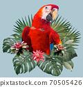 Polygonal Illustration Scarlet macaw bird. 70505426