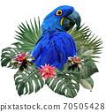 Polygonal Illustration Hyacinth macaw bird. 70505428