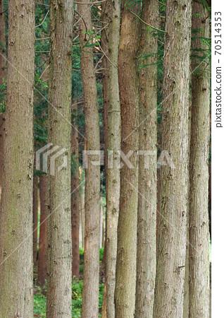 Cheongnyeongsan Cedar and Cypress Forest 70514353