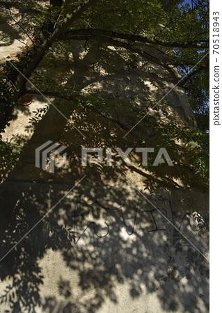 陽光照射下牆上的樹影。 70518943