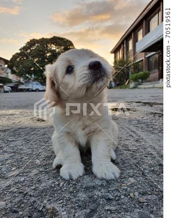 小狗 70519561