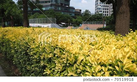 서울숲 70519918