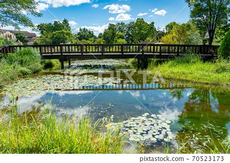 수련의 연못과 다리 70523173