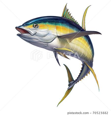 yellow tuna. black fin yellow tuna on white. Realistic isolated illustration. 70523882