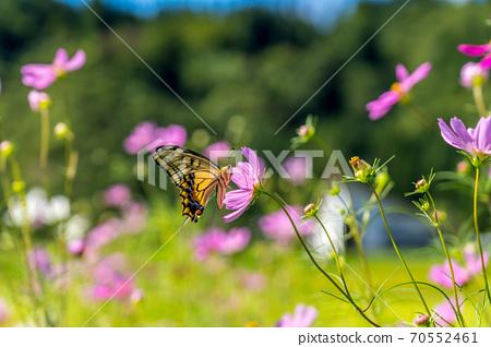 在宇宙領域飛蝴蝶 70552461