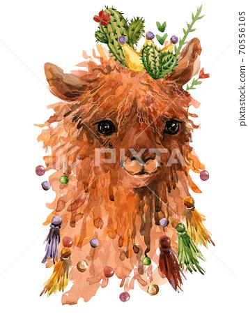 Llama alpaca. cute cartoon lama watercolor illustration 70556105