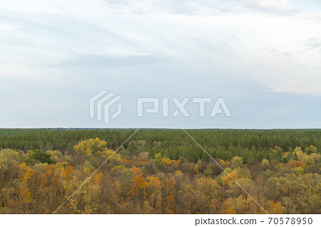 autumn forest landscape with blue sky background 70578950