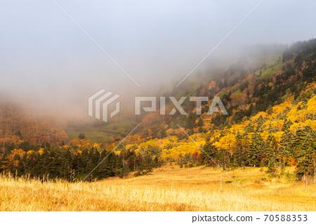 秋雾在晨雾中抽烟的芬芳是平坦的 70588353