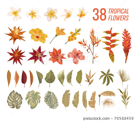 Tropical floral boho collection. Watercolor tropic flowers and leaves. Vector design isolated elements of palms 70588459