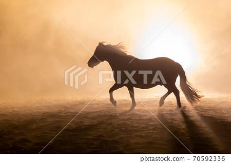 Shetland pony in smokey setting 70592336