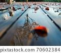 廣島大通市的早晨-雨後的葉子散落在水鏡中- 70602384
