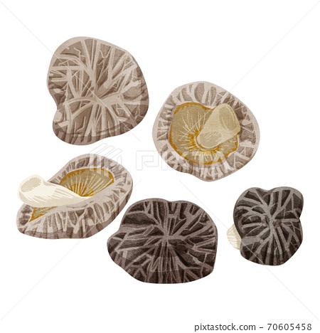 乾香菇的水彩風格插圖 70605458
