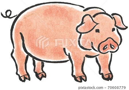 돼지 70608779