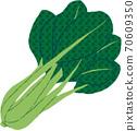日本芥末菠菜 70609350