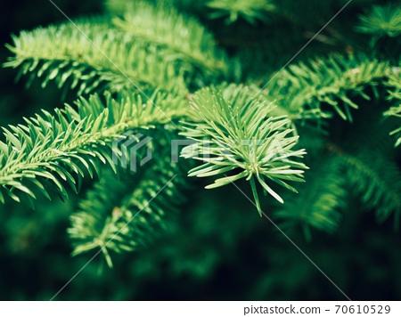 森林綠色松針背景 70610529