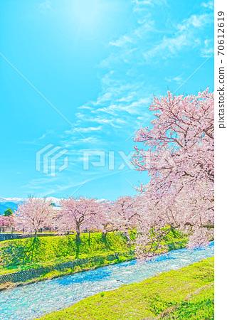 [動漫風格]富山縣船川川里的日本春天沿清澈的溪水排成一排的櫻花樹 70612619