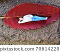一個男人睡在一片落葉 70614220