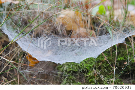 Dew on a spider's web. 70620935