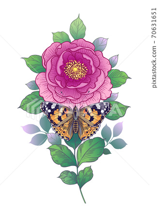 Hand Drawn Pink Flower  and  Butterfly 70631651