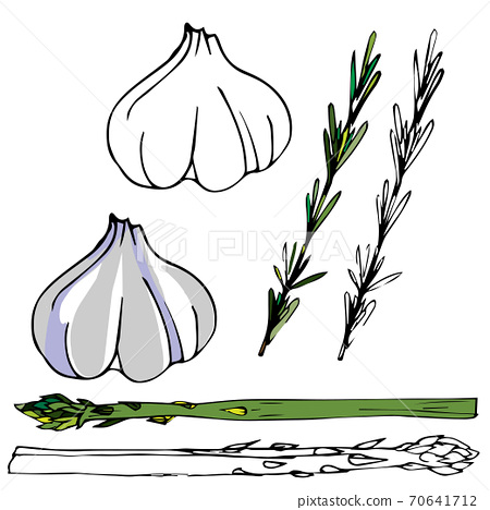 Drawn garlic, rosemary and asparagus. digital illustration. Cooking book design. 70641712