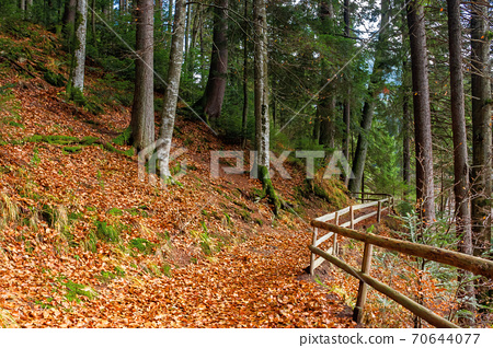 pathway through the forest. beautiful autumn scenery. wooden fence along the walkway covered in fallen foliage 70644077