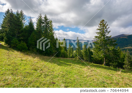 spruce forest on the meadow in mountains. sunny autumn weather with clouds on the sky. beautiful carpathian landscape 70644094