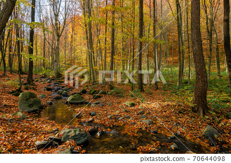 brook in the forest. wonderful nature scenery on a sunny autumnal day. trees in colorful foliage. water stream among the rocks and fallen leaves on the ground 70644098