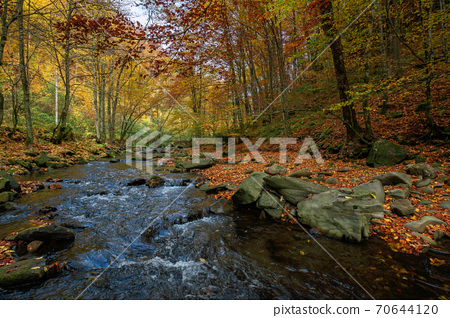 mountain river in beech forest. beautiful autumnal scenery of carpathian woodland. trees in fall colors. boulders in the stream. nature freshness concept 70644120