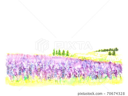 Landscape of lavender field painted in watercolor 70674328