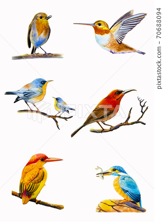 Set watercolor painting colorful of bird. 70688094