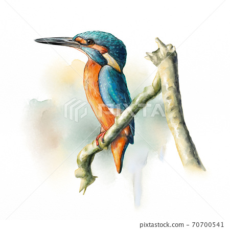 Wetland birds, King Fisher 70700541