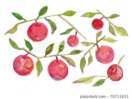 빨간 사과가 여문 가지의 수채화 일러스트 70713831
