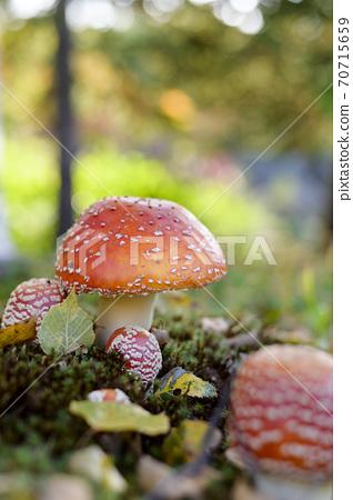 귀여운 버섯 (독버섯들 버섯) 70715659