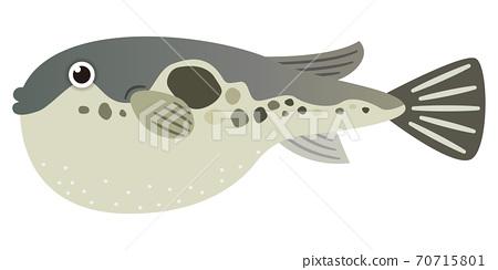 河豚的插圖 70715801