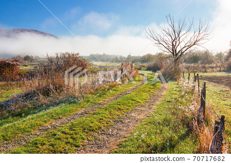 rural landscape on a foggy sunrise. beautiful countryside scenery in autumn season. leafless tree along the fence by the road. bright sunny morning 70717682