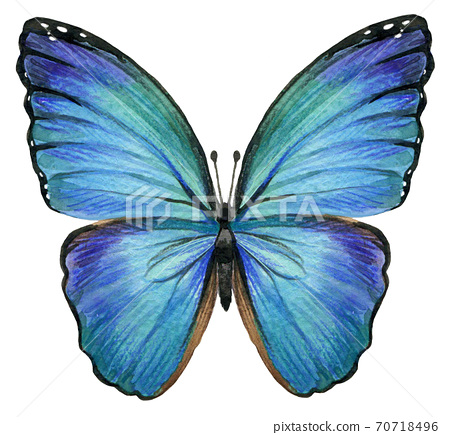 Butterfly isolated. watercolor illustration 70718496