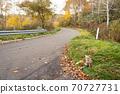 Autumn fox in Hokkaido Niseko on the pass 70727731