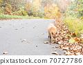 Autumn fox in Hokkaido Niseko 70727786