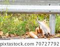 Autumn fox in Hokkaido Niseko grooming 70727792