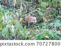 Autumn Kita Kitsune in Hokkaido Niseko Top Eyes 1 70727800